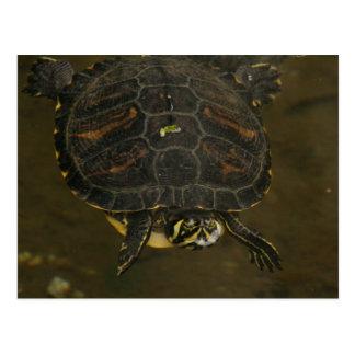 Charca de la tortuga postal