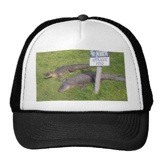 Charca del cocodrilo gorras