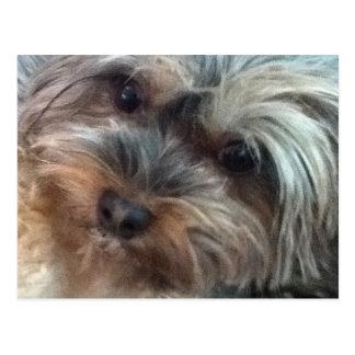 Charlotte la postal del pequeño perro