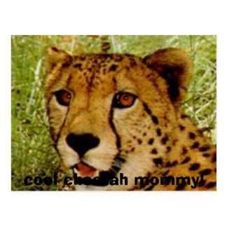 ¡chetface, mamá fresca del guepardo! postal