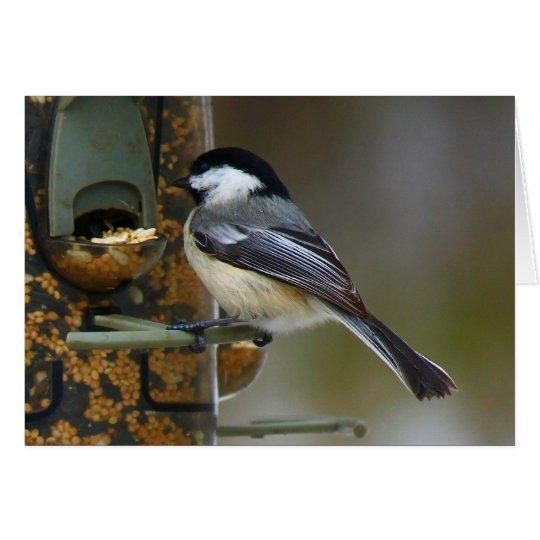 Chickadee en el Birdfeeder Tarjeta De Felicitación
