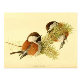 Chickadees Postal