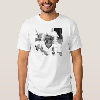 Chihuahua de Marilyn Camisas