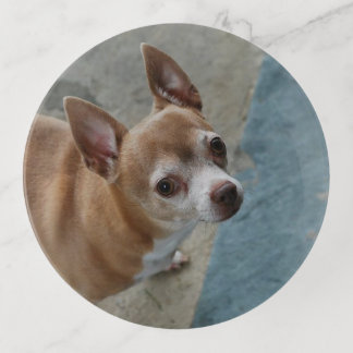 Chihuahua de Rocco
