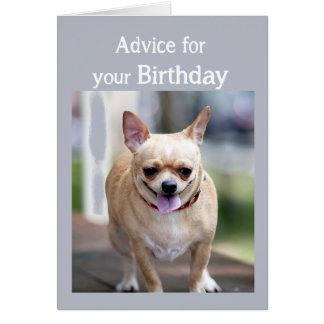 Chihuahua del humor del cumpleaños demasiada torta tarjeta