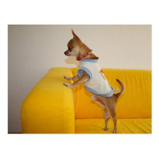 Chihuahua dulce de Charlie Postal