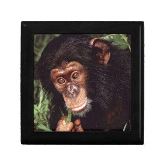 Chimpansee Cajas De Recuerdo