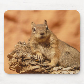 Chipmunk divertido que miente en una roca alfombrilla de ratón