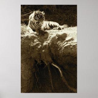 Chispas de KIW: EL Tigre Póster