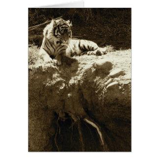 Chispas de KIW Tarjeta del EL Tigre