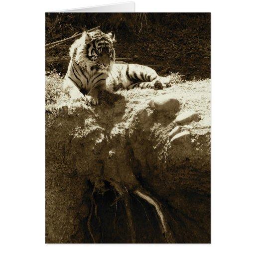 Chispas de KIW: Tarjeta del EL Tigre