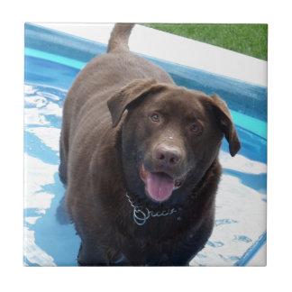 Chocolate Labrador que se divierte en una piscina Azulejo Cuadrado Pequeño
