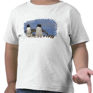 Chrysocome del Eudyptes de los pingüinos de Rockho Camisetas