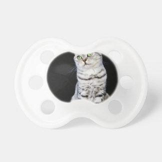 Chupete Gato británico adulto del pelo corto en fondo
