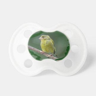 Chupete Green Finch - pinzón de verde Verdier foto JL