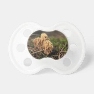 Chupete Hongos coralinos de coloración verdes (abietina de