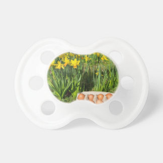 Chupete Huevos en caja en hierba con los narcisos