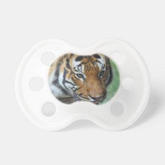Chupete Primer del tigre del Malay de los alquileres