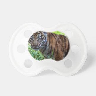 Chupete Tigre Cub de Sumatran de los alquileres
