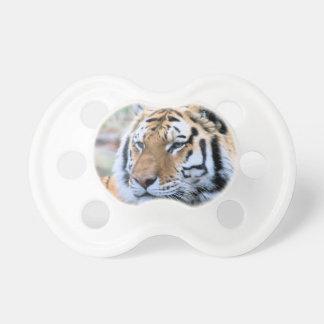 Chupete Tigre de Bengala real estoico de los alquileres