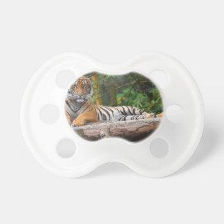 Chupete Tigre del Malay de los alquileres que gandulea en