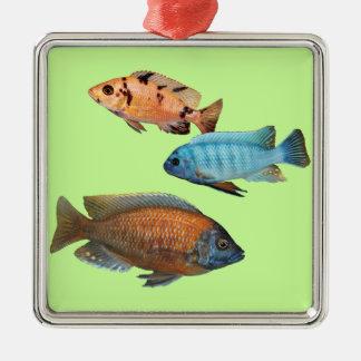 Cichlids africanos adornos