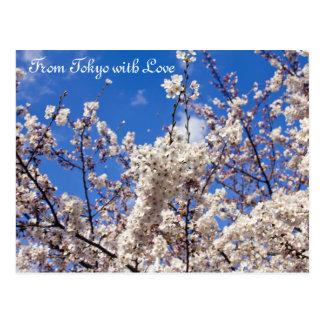 Cielo azul blanco Tokio de las flores de cerezo de Postal