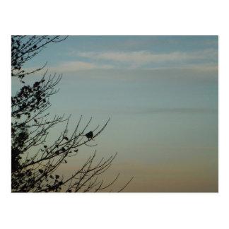 Cielo de azules claros azul de la silueta del pája tarjetas postales