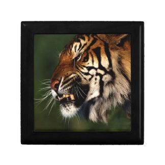 Cierre de la cabeza del tigre para arriba caja de joyas