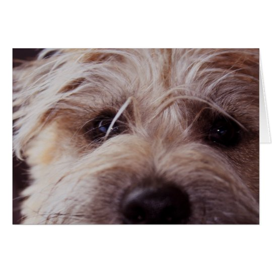 Cierre de la cara del perrito encima de la tarjeta