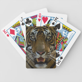 Cierre de la cara del tigre para arriba baraja de cartas bicycle