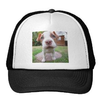 cierre de la nariz del marrón del perro del gorras de camionero