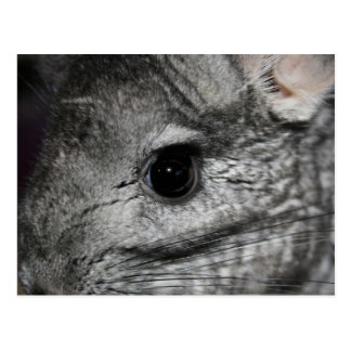 cierre del ojo de la chinchilla para arriba postal