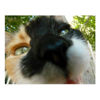 Cierre divertido de la cara del gato encima de la postal