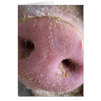 Cierre rosado de la nariz del cerdo encima de la tarjeta de felicitación