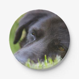 Ciérrese encima de cara vieja negra de los perros plato de papel
