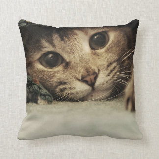 Ciérrese para arriba de ojos de gatos de un tabby cojín decorativo