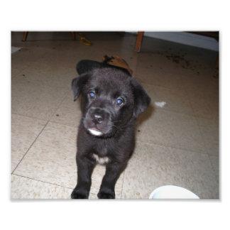 Ciérrese para arriba de pequeño perrito negro con  impresion fotografica