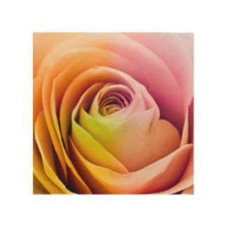 Ciérrese para arriba de pétalos color de rosa impresión en madera