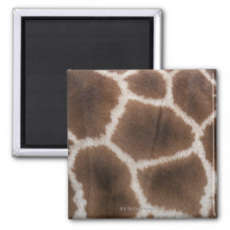 Ciérrese para arriba de piel de las jirafas imán