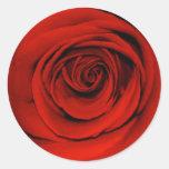 Ciérrese para arriba de rosa rojo pegatina redonda
