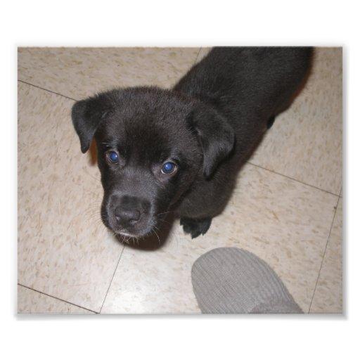 Ciérrese para arriba del pequeño perrito negro que fotografía