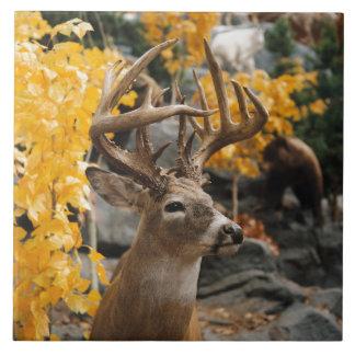 Ciervos del trofeo azulejo