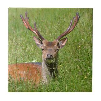 Ciervos en barbecho del dólar en hierba azulejo cuadrado pequeño