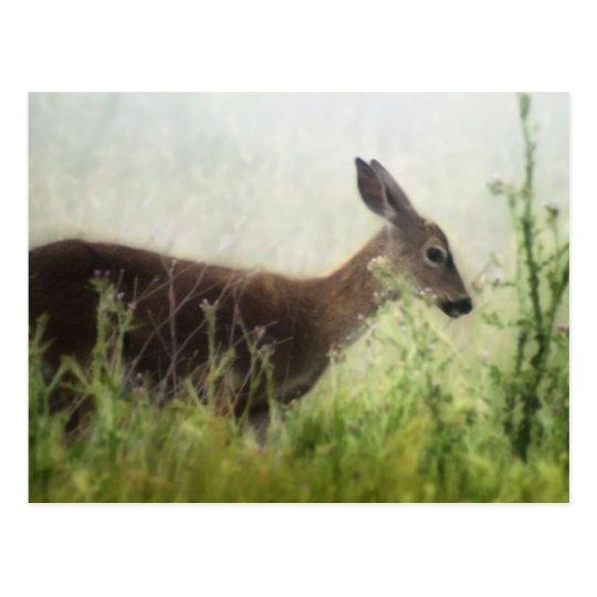 Ciervos en campo postal