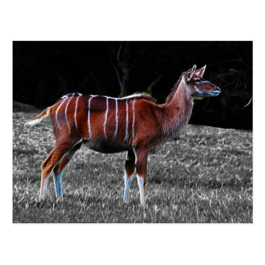 Ciervos Kudu Postal