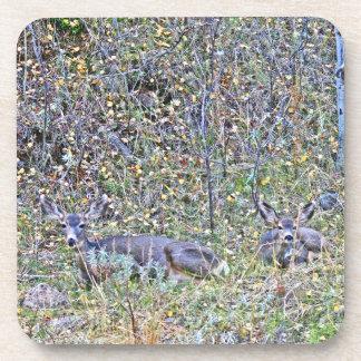 Ciervos y cervatillos de la gama posavasos