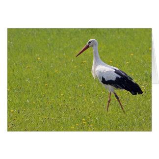 Cigüeña blanca en un prado tarjeta de felicitación