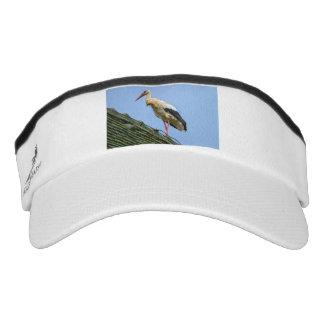 Cigüeña blanca europea, ciconia visera