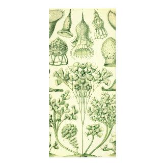 Ciliatas de Ernst Haeckel Diseño De Tarjeta Publicitaria